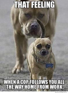 45 Funny Dog Memes - Funny Dog Quotes - 25 funny dog memes that feature a picture of a pooch and a funny caption written by a human. The post 45 Funny Dog Memes appeared first on Gag Dad. Funny Animal Jokes, Funny Animals With Captions, Crazy Funny Memes, Really Funny Memes, Funny Captions, Stupid Funny Memes, Cute Funny Animals, Funny Relatable Memes, Funny Cute