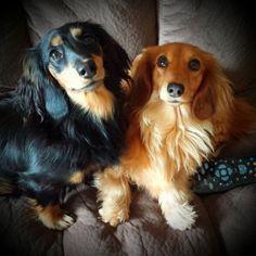 scarlett & penny