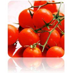 SeedsNow.com: Tomato - Tiny Tim