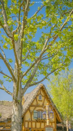 Cabin, D1, House Styles, Green, Nature, Painting, Image, Color, Home Decor