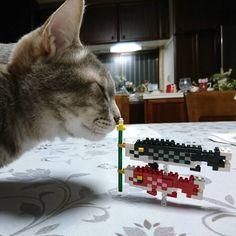 """86 mentions J'aime, 3 commentaires - gami (@ten_to_haru) sur Instagram: """"#nanoblock で #こいのぼり 作りました♪  #てんはるちゃん #ネコ #ネコ部 #猫 #猫部 #野良出身 #かぎしっぽ #にゃんすたぐらむ #にゃんだふるらいふ #picneko…"""""""