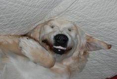 i'm sorry, but upside down dogs are just funny.