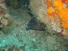 Foto Buceo Morena en Playa de Poniente Tarifa-CLUB OCEAN ADDICTS