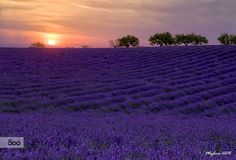 Sunset in Valensole 2 by Marco Migliardi on 500px