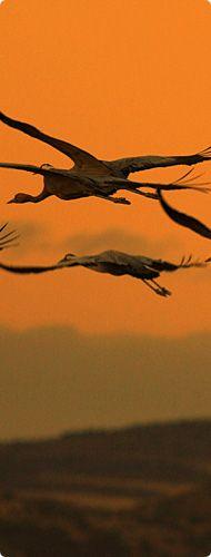Turismo Ornitológico Monfragüe es el mejor lugar para ver aves en Extremadura  (·Grullas en Monfragüe)  Spain