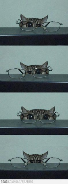 kitten glasses