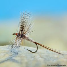 "quillgordon: ""March Brown on a TMC100.. #flyfishing #flytying #catskills #catskill #dryfly #marchbrown #deercreekflies """
