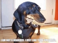 Such a wiener dog thing to say.  I am not a hoarder. I just like to be prepared.