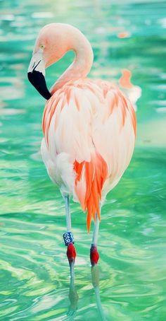 Leonova  flamingo