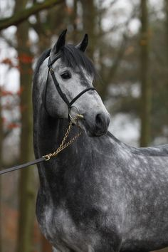Love when greys have dapples! Most Beautiful Horses, All The Pretty Horses, Cute Horses, Horse Love, Horse Photos, Horse Pictures, Pretty Animals, Animals Beautiful, Arte Equina