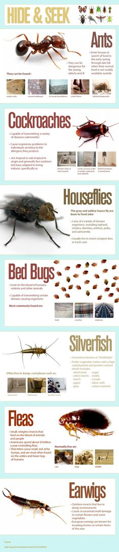 Where bugs are hiding in your house.  Lets just hope they haven't gotten to the bed yet.