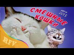 Самые смешные кошки #2 ∙ Приколы с животными 2015 ∙ Best Funny Cats Comp...