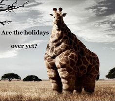 ALMOST OVER... Enjoy Your Weekend! Potjiekos, Vetkoek, Braaibroodjies, Fried Chicken, French Fries, Cole slaw, Malva pudding, Pecan pie, Wine and Brandy & Coke... Yummmmmm! Best South African holiday Dishes & Drinks! www.upsouthadventures.com #adventure #travel #southafrica #motorcycletours