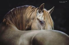 There's a reason why the horses eyes are told to be the mirror to the soul. But to whose? To the animals soul or to those who look at it? I…