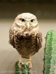 National Aviary Pittsburgh — Adults $13 & kids $11 — half price with AZA member zoo pass. 10-5 daily.