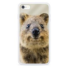 """Turns out these cute Quokkas take better selfies than anyone at Shelfies ever could! Taking Good Selfies, Australia Animals, Quokka, Smartphone, Iphone Cases, Face, Australian Animals, Faces, I Phone Cases"