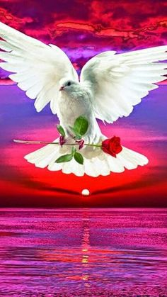 Science Discover Love You Gif Love You Images Beautiful Flowers Wallpapers Beautiful Nature Wallpaper Beautiful Love Pictures Beautiful Mind Dove Pictures Print Pictures Sunset Wallpaper Dove Images, Dove Pictures, Cute Love Pictures, Jesus Pictures, Print Pictures, Beautiful Nature Pictures, Beautiful Gif, Beautiful Roses, Beautiful Landscape Wallpaper