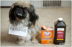 3 Natural Homemade Cleaners to Remove Pet Stains & Odors | Everyday Roots