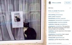 Missing cat found sitting next to his own missing cat flyer. Haha
