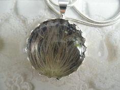 Stardust-Wispy Apache Plume Blossom-Victorian by giftforallseasons
