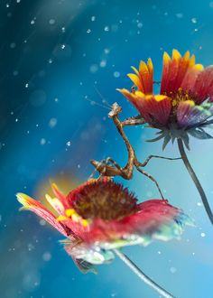 Malaysian photographer Peiling Lee captures beautiful, dreamlike macro photographs of tiny critters she finds in her garden. She uses a Canon 50D and a 100mm Macro lens.