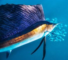 Ocean Deep, Fishing Pictures, Amphibians, Amazing Photography, Ale, Nature, Creatures, Fine Art, Photo And Video