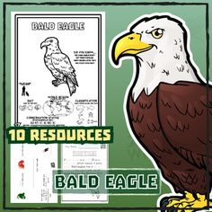 Bald Eagle -- 10 Resources -- Coloring Pages, Reading & Activities Color Activities, Reading Activities, Activity Sheets, Reading Levels, Teaching Materials, Wild Child, Social Studies, Eagles, Bald Eagle