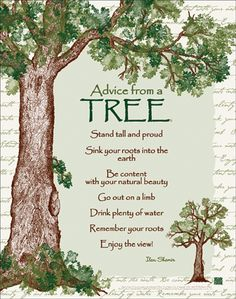 advice from a tree. stand tall and proud sink your roots into the earth be content with your natural beauty go out on a limb drink plenty of water remember your roots enjoy the view! Life Quotes Love, Family Quotes, Advice Quotes, Wisdom Quotes, Art Quotes, Good Advice, In This World, Just In Case, Quotations