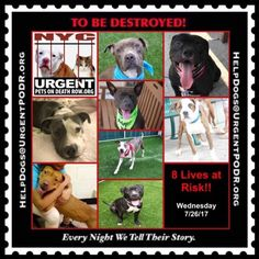 TO BE DESTROYED 07/26/17 - - Info   To rescue a Death Row Dog, Please read this:http://information.urgentpodr.org/adoption-info-and-list-of-rescues/  To view the full album, please click here:http://nycdogs.urgentpodr.org/tbd-dogs-page/ -  Click for info & Current Status: http://nycdogs.urgentpodr.org/to-be-destroyed-4915/
