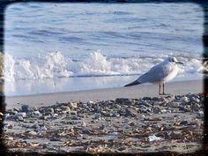 Gabbiano al fresco delle onde cerialesi