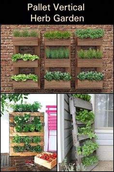 Make good use of space by building this vertical pallet herb garden! Make good use of space by building this vertical pallet herb garden! Herb Garden Pallet, Pallets Garden, Pallet Gardening, Herb Gardening, Organic Gardening, Herbs Garden, Urban Gardening, Garden Planters, Vertical Pallet Garden