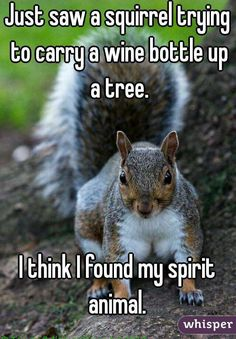 Just saw a squirrel trying to carry a wine bottle up a tree. I think I … Just saw a squirrel trying to carry a wine bottle up a tree. I think I found my spirit animal. Animal Humour, Animal Jokes, Funny Animal Memes, Funny Animal Pictures, Squirrel Pictures, Squirrel Memes, Squirrel Girl, Cute Squirrel, Secret Squirrel