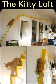 The Kitty Loft  Have your cat exercise through your home with this DIY.