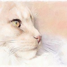 Portrait chat maine coon                                                       …