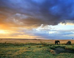 Kenya - One day I WILL go there!