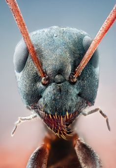 A bug's eye view: The incredible close-up images of insects Macro Fotografie, Fotografia Macro, Picture Cube, Micro Photography, Insect Photography, Levitation Photography, Exposure Photography, Water Photography, Abstract Photography