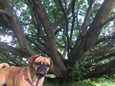 Mom was looking for interesting trees but I thought I was more interesting 😀