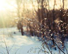 Winter Dreamy Photo  Warm Brown Beige Bright by EvgeniyaMaslakova, $14.00