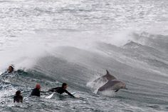 Surfers wait for waves with dolphins at Bondi Beach in Sydney on September 25, 2012. (Daniel Munoz/Reuters) via boston.com #Photography #Surfers #Dolphins #Bondi_Beach #Daniel_Munoz