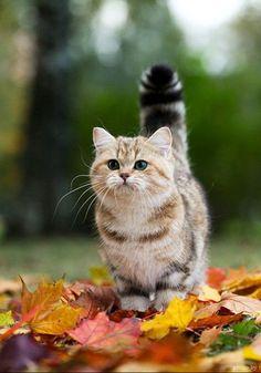 őszi állatos felvételek
