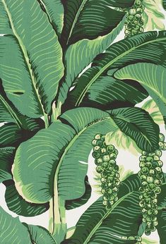 "Carleton Varney ""Brazilliance"" Banana Leaf Wallpaper."