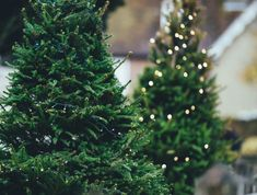 Real or fake, big or small, here's everything you need to know about Christmas Trees