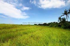 #bali ricefields