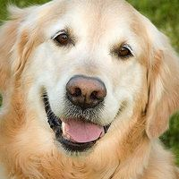 Pests to Kill for Longer Life of Your Pets | Journal Hotdog Collars