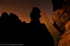 Bugloss at sunset - Francisco Mingorance - Wildlife Photographer of the Year 2010 : In Praise of Plants and Fungi - Specially commended