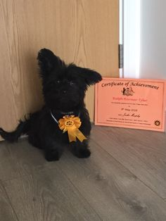 Certificate Of Achievement, Puppy Classes, Best Start, Puppies, Dogs, Animals, Cubs, Animales, Animaux