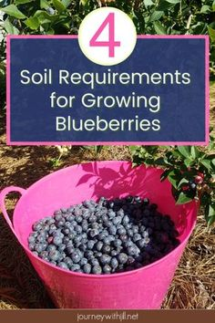 Container Gardening For Beginners Growing blueberries is easy once you know the soil requirements. Whether you want to grow your blueberry bushes in the ground or in containers, these 4 guidelines will get you started growing blueberries yourself! Home Vegetable Garden, Fruit Garden, Flowers Garden, Flower Gardening, Vegetable Bed, Herb Gardening, Gardening Vegetables, Gardening Hacks, Vintage Gardening