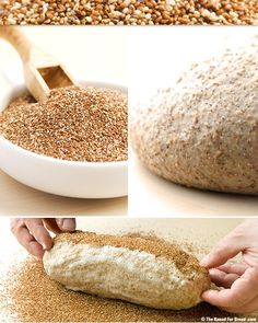 """Teff Grain Bread Recipe. The grains are so small that they consist mainly of bran and germ. This makes Teff grains very nutritious in fiber, protein, Iron and Calcium. They also contain no gluten! The bread itself, is made with stone ground whole wheat, bread flour, rye and bran flakes. If your looking for a health bread this is it!""""  from blog.thekneadforbread.com"""
