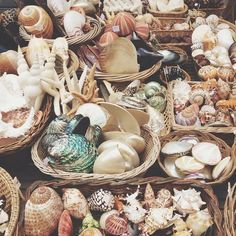 shopping for shells at the #Paris flea markets
