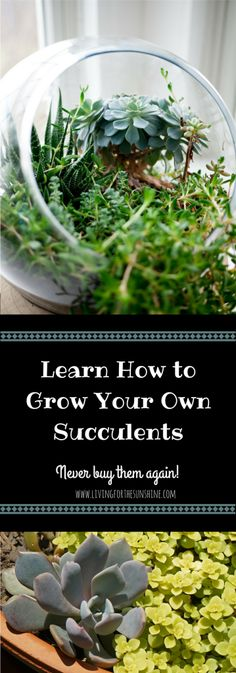 How to Care for and Grow Succulents